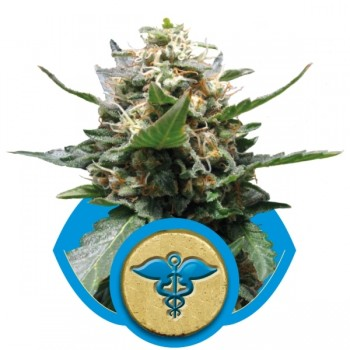 http://grubylolek.pl/1037-thickbox_atch/nasiona-marihuany-royal-medic.jpg