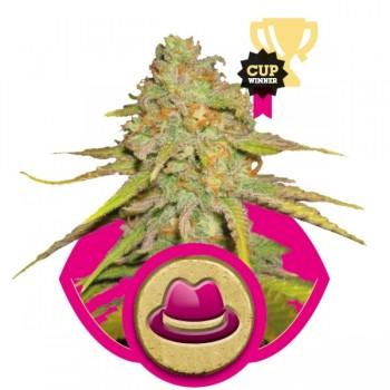 http://grubylolek.pl/1039-thickbox_atch/nasiona-marihuany-og-kush.jpg
