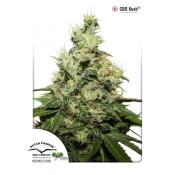 http://grubylolek.pl/1049-thickbox_atch/nasiona-marihuany-cbd-kush.jpg