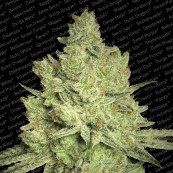 http://grubylolek.pl/266-thickbox_atch/nasiona-marihuany-jacky-white.jpg