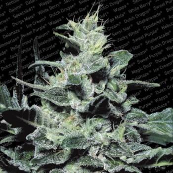 http://grubylolek.pl/269-thickbox_atch/nasiona-marihuany-nebula.jpg