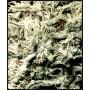 nasiona marihuany White Rhino