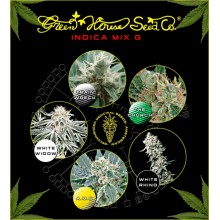nasiona marihuany Mix - Indica G