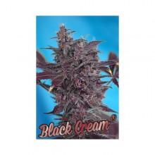nasiona marihuany Black Cream ® Auto