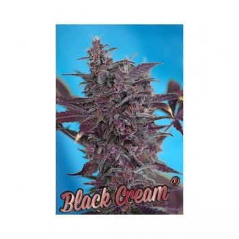 http://grubylolek.pl/408-thickbox_atch/nasiona-marihuany-black-cream.jpg