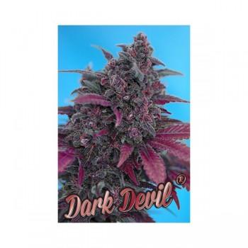 http://grubylolek.pl/410-thickbox_atch/nasiona-marihuany-dark-devil.jpg