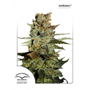 http://grubylolek.pl/814-thickbox_atch/nasiona-marihuany-autoblueberry.jpg