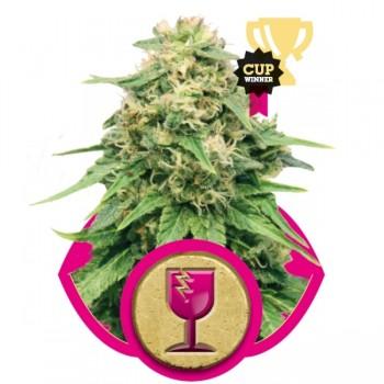 http://grubylolek.pl/834-thickbox_atch/nasiona-marihuany-critical.jpg