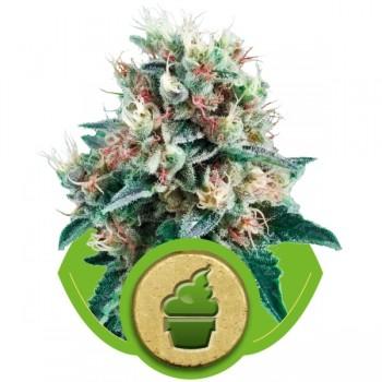 http://grubylolek.pl/879-thickbox_atch/nasiona-marihuany-royal-creamatic.jpg