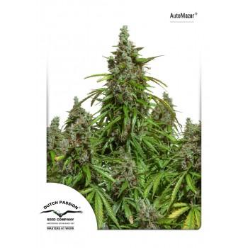 http://grubylolek.pl/896-thickbox_atch/nasiona-marihuany-automazar.jpg