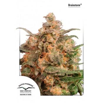 http://grubylolek.pl/901-thickbox_atch/nasiona-marihuany-brainstorm.jpg