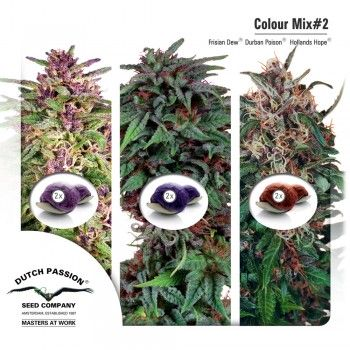http://grubylolek.pl/906-thickbox_atch/nasiona-marihuany-mix-2.jpg