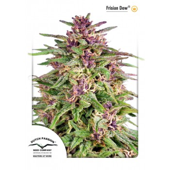 http://grubylolek.pl/921-thickbox_atch/nasiona-marihuany-frisian-dew.jpg