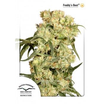 http://grubylolek.pl/927-thickbox_atch/nasiona-marihuany-freddys-best.jpg