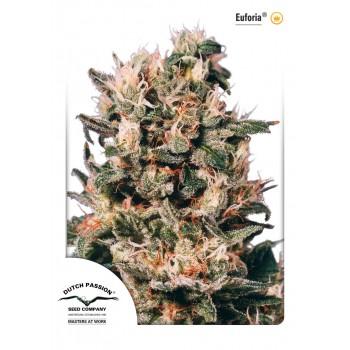 http://grubylolek.pl/930-thickbox_atch/nasiona-marihuany-euforia.jpg