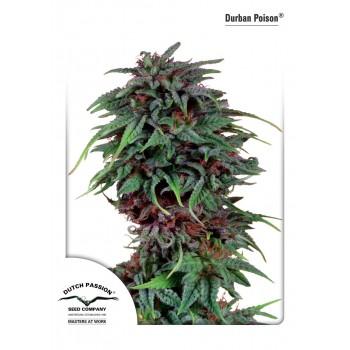 http://grubylolek.pl/936-thickbox_atch/nasiona-marihuany-durban-poison.jpg