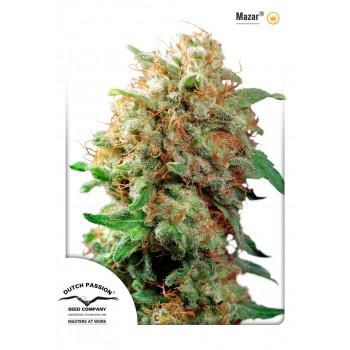 http://grubylolek.pl/939-thickbox_atch/nasiona-marihuany-mazar.jpg