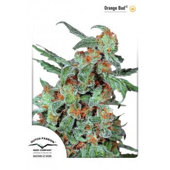 http://grubylolek.pl/944-thickbox_atch/nasiona-marihuany-orange-bud.jpg