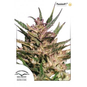 http://grubylolek.pl/950-thickbox_atch/nasiona-marihuany-passion-1.jpg