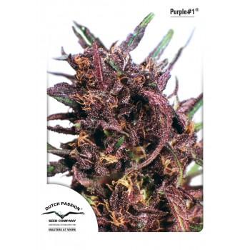 http://grubylolek.pl/960-thickbox_atch/nasiona-marihuany-purple-1.jpg