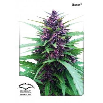 http://grubylolek.pl/961-thickbox_atch/nasiona-marihuany-shaman.jpg