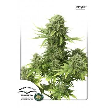 http://grubylolek.pl/964-thickbox_atch/nasiona-marihuany-starryder.jpg