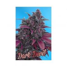 nasiona marihuany Dark Devil ® Auto